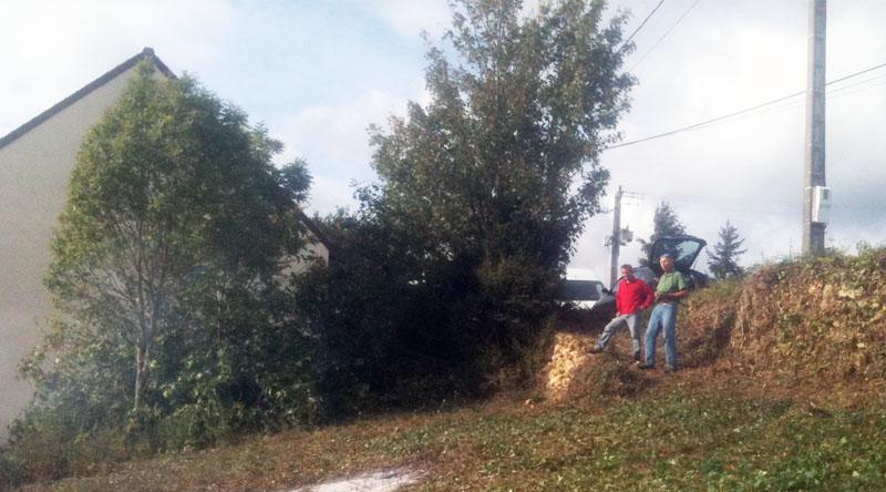 arbres conservés près de la route