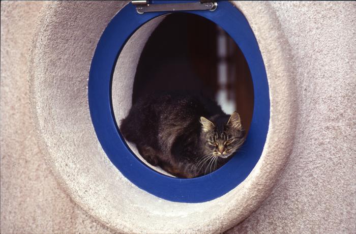 chat chez marc