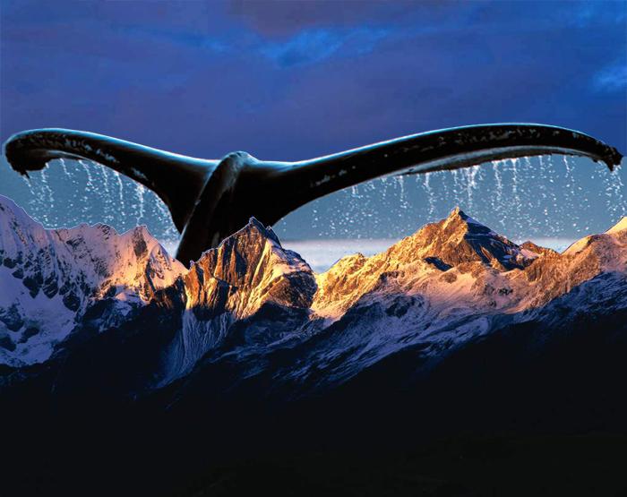 baleine-des-montagnes-700