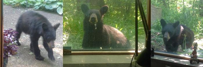 ours chez Carol et Tom