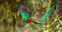 le serpent a plumes quetzal